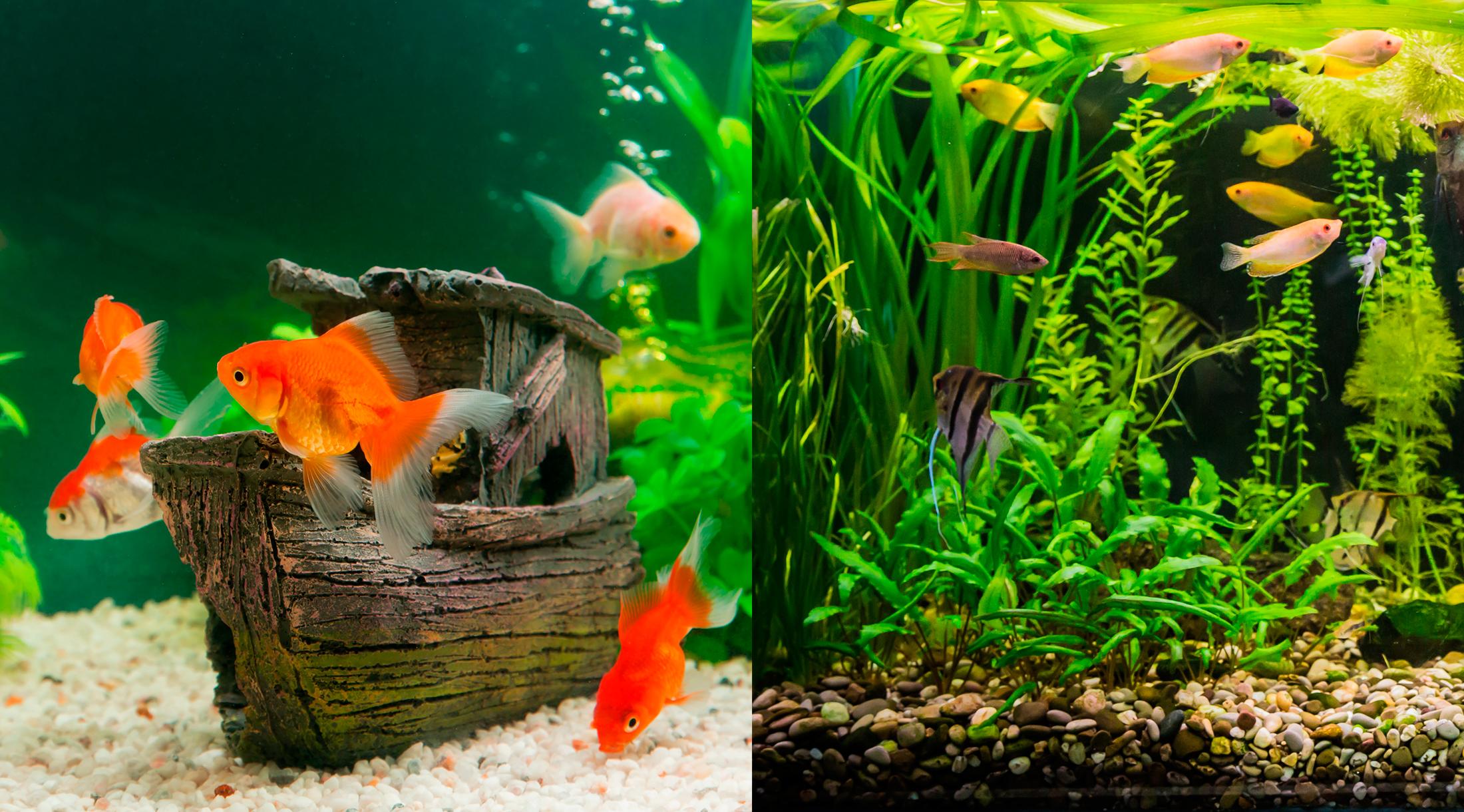 El acuario y su decoración