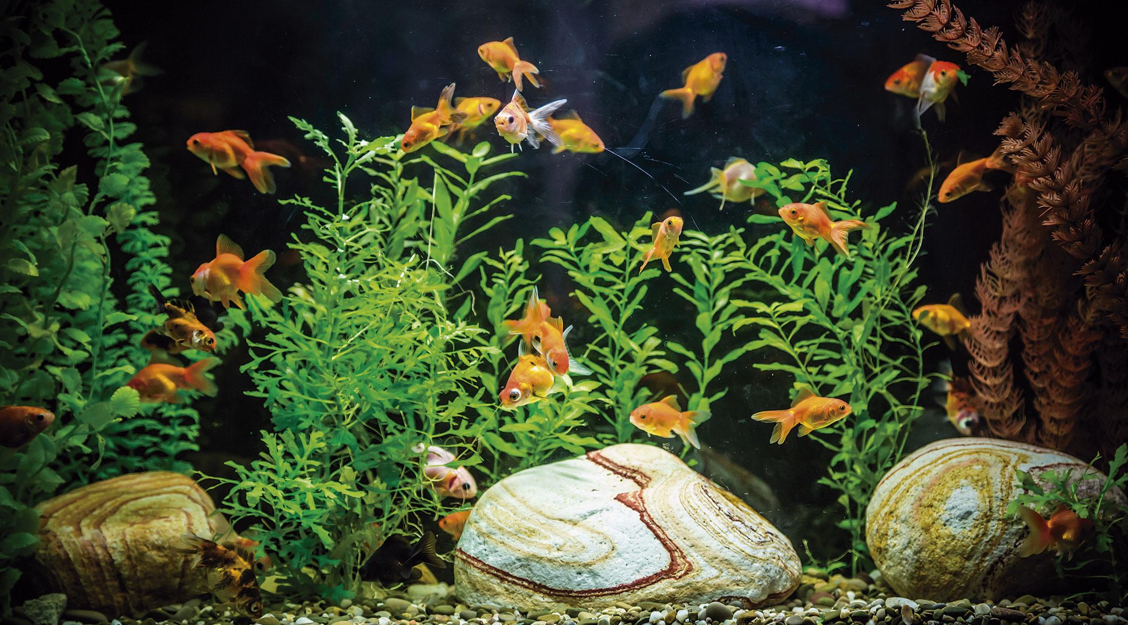 Guía para principiantes en la acuariofilia