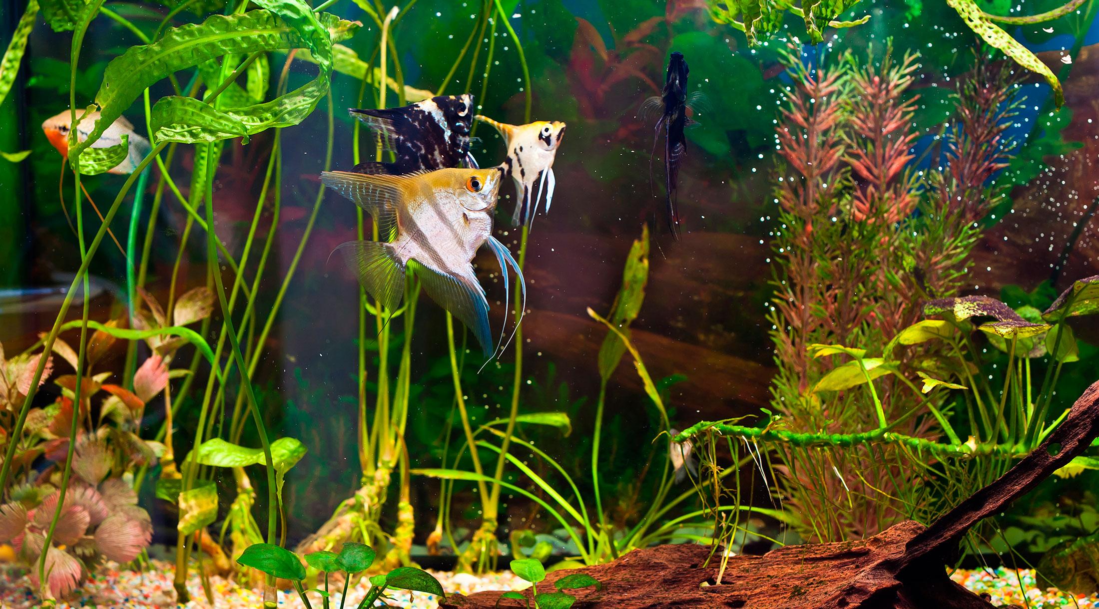 El ciclo biológico del acuario