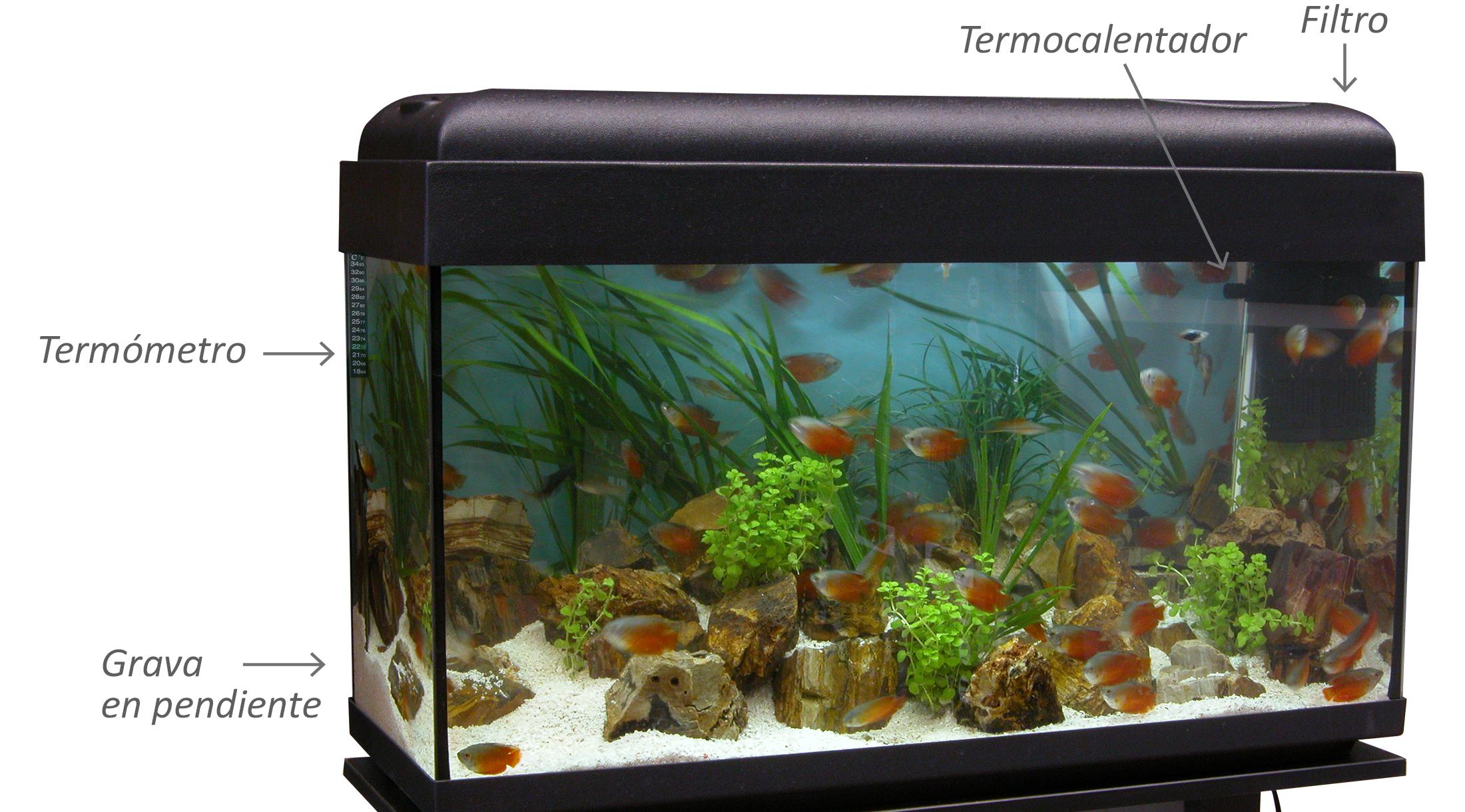 ¿Cómo instalar componentes de un acuario?