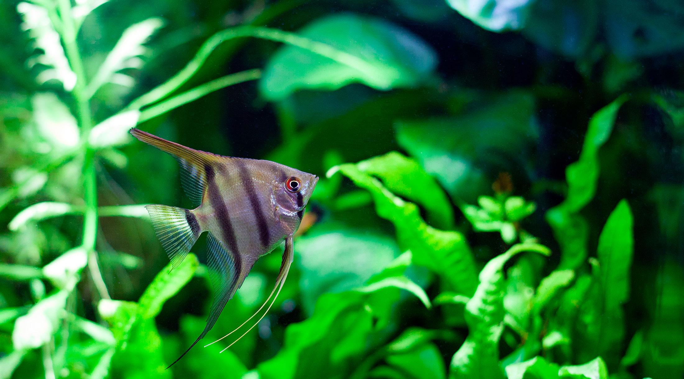 Alimentación de peces y plantas