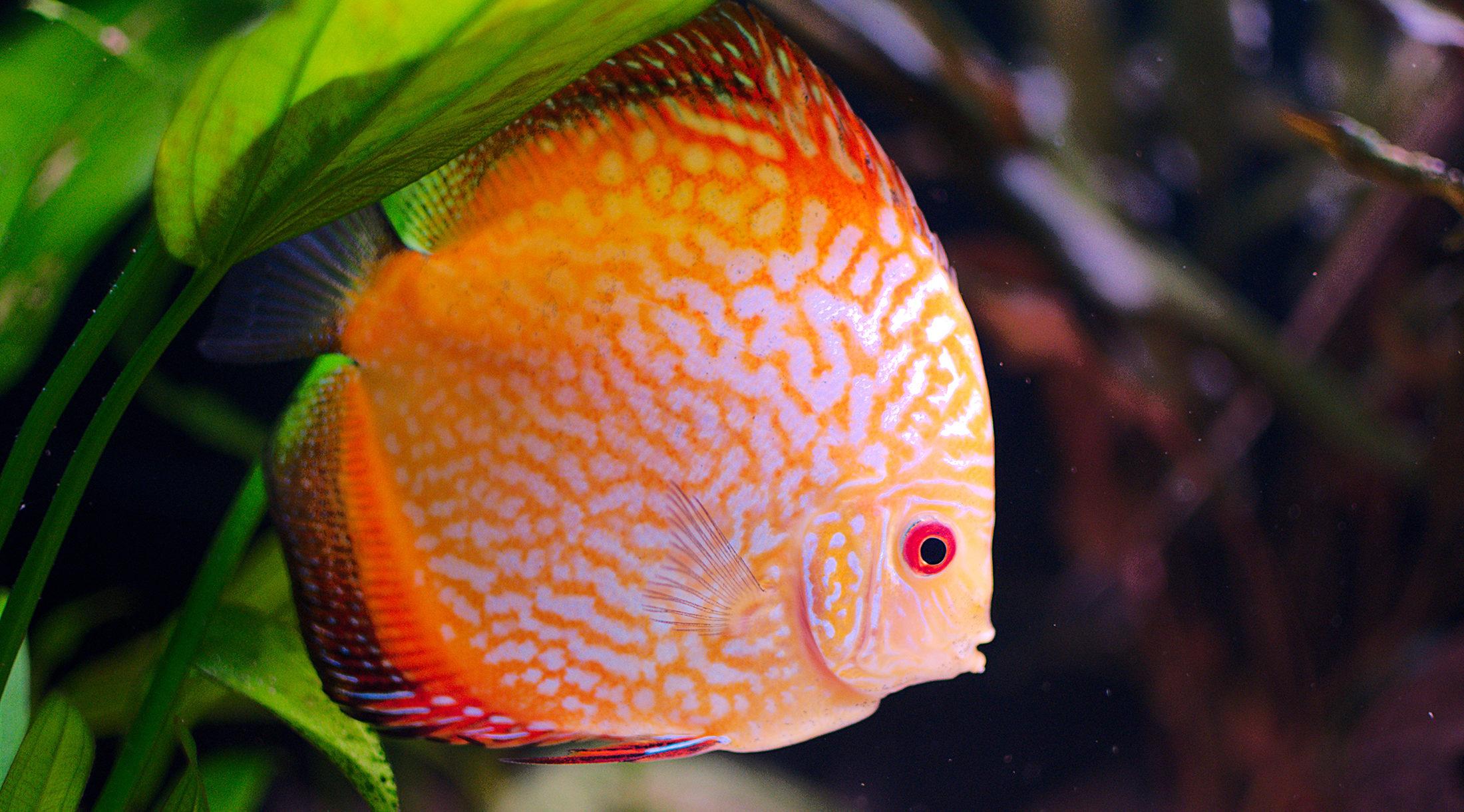 Cuidados y mantenimiento del acuario