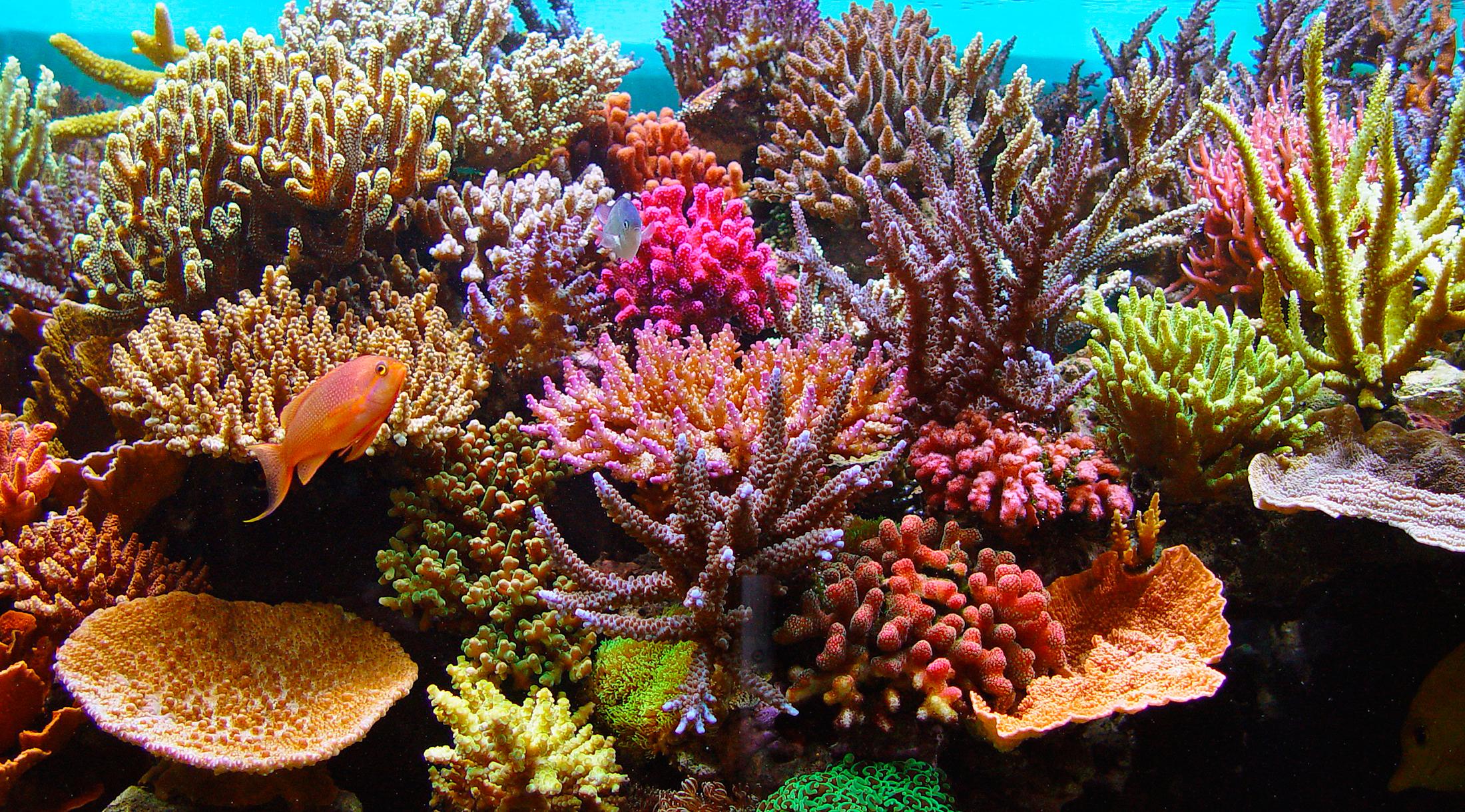 Características del agua en acuarios marinos