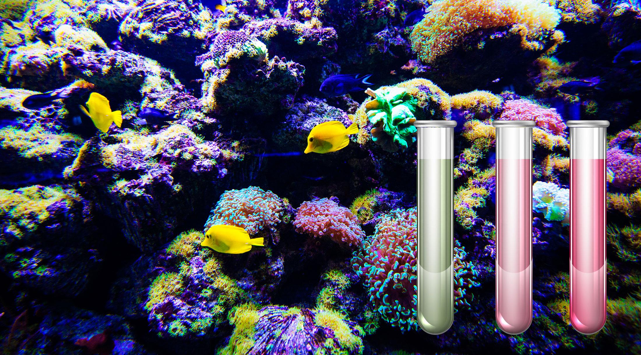 El ciclo del nitrógeno con el filtro Hydra